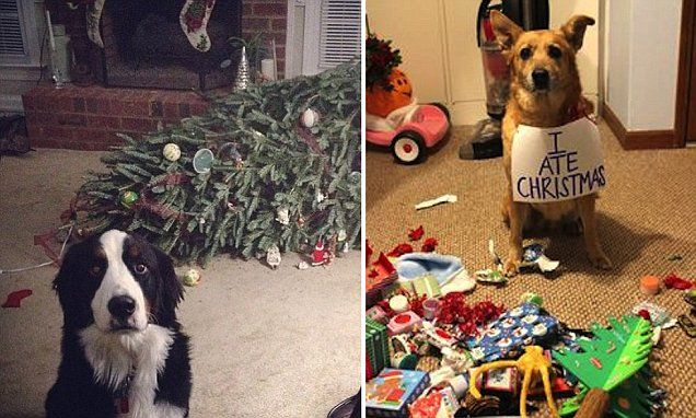 Hilarious photos reveal the cats and dogs ruining Christmas