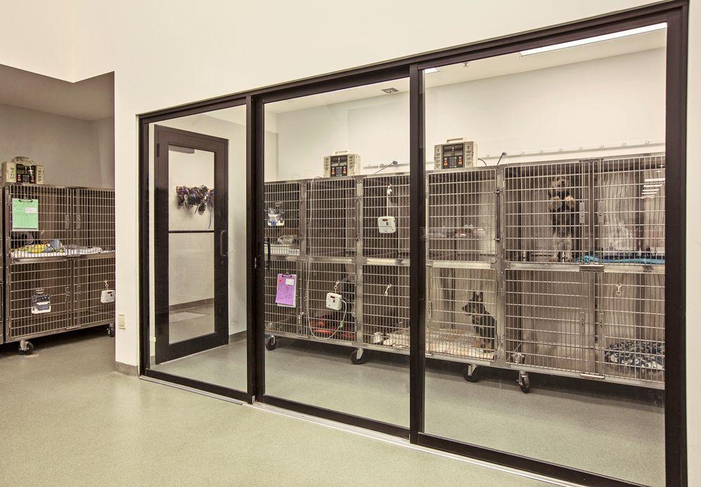 Isolation Room Hospital Design Hospital Design Pet Clinic Veterinary Clinic