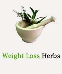 Visit our site http://www.herbsforweightloss.co/ for more information on Herbs For Weight Loss. Herbs for weight loss are also recognized to offer an individual with an increase in energy levels; this in turn aids in preserving a normal work out regime. Additionally, these herbs for weight loss likewise allow the specific absorb their food far better and the metabolic rate likewise speeds up and is a lot more efficient.