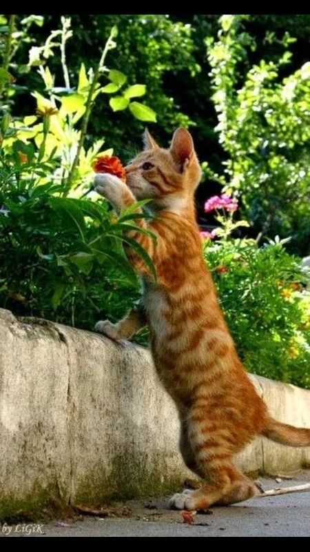 """I just love the smell of catnip in the morning"" Kitten"