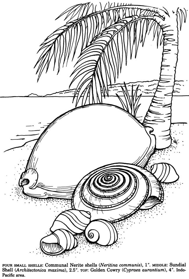 shells of the world sample pages @ dover publications