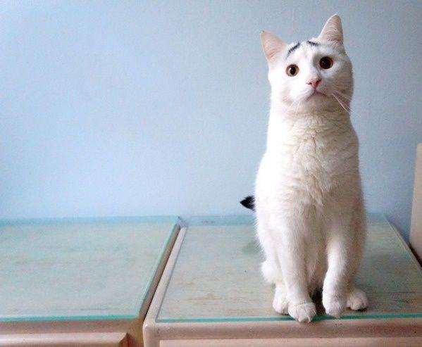 gato preocupado