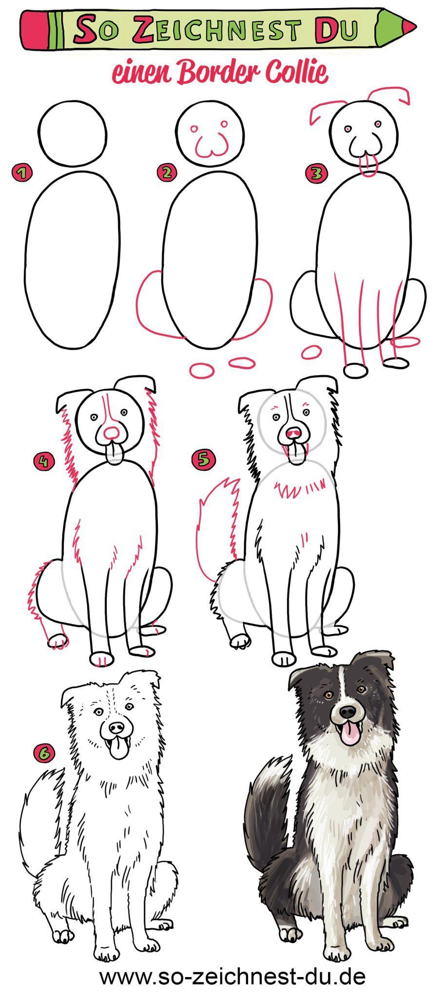 So Zeichnest Du Einen Hund Border Collie Hund Zeichnen Hundezeichnung Susse Tiere Zeichnen