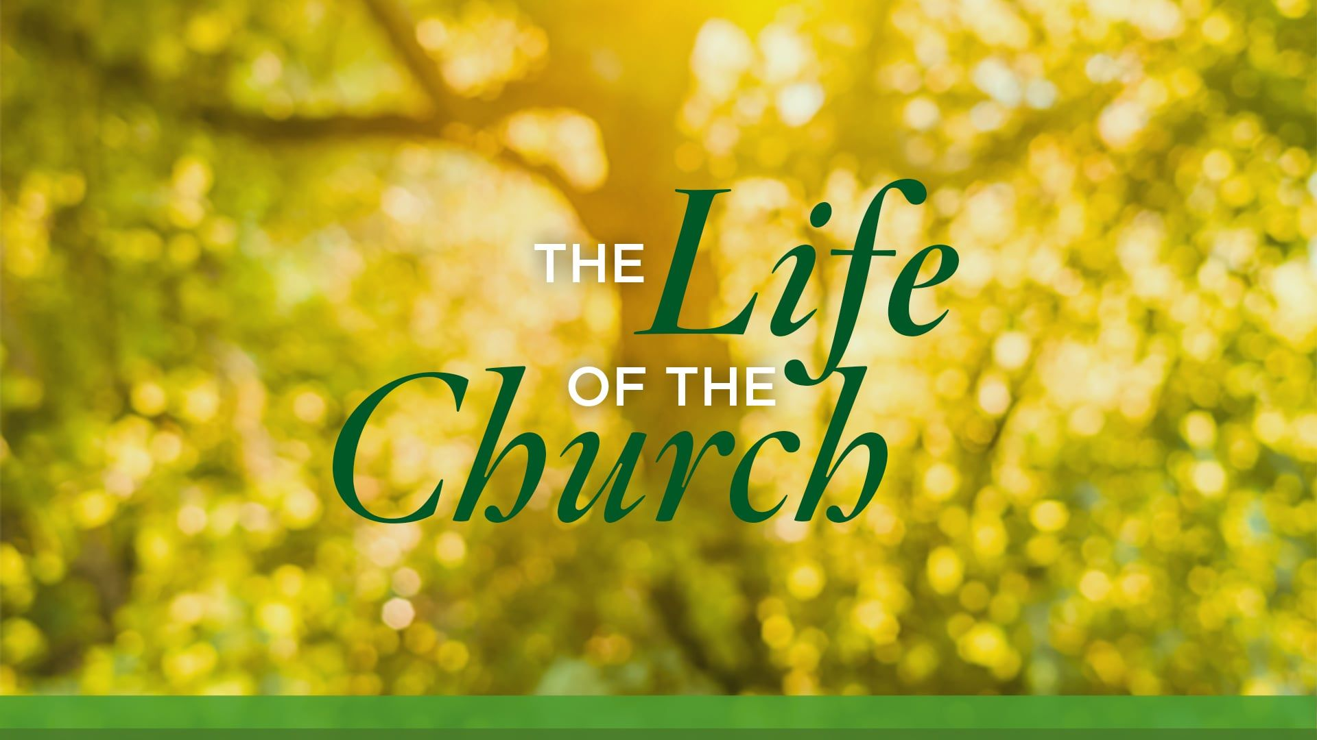 The Life of the Church | Part 2: The New Normal