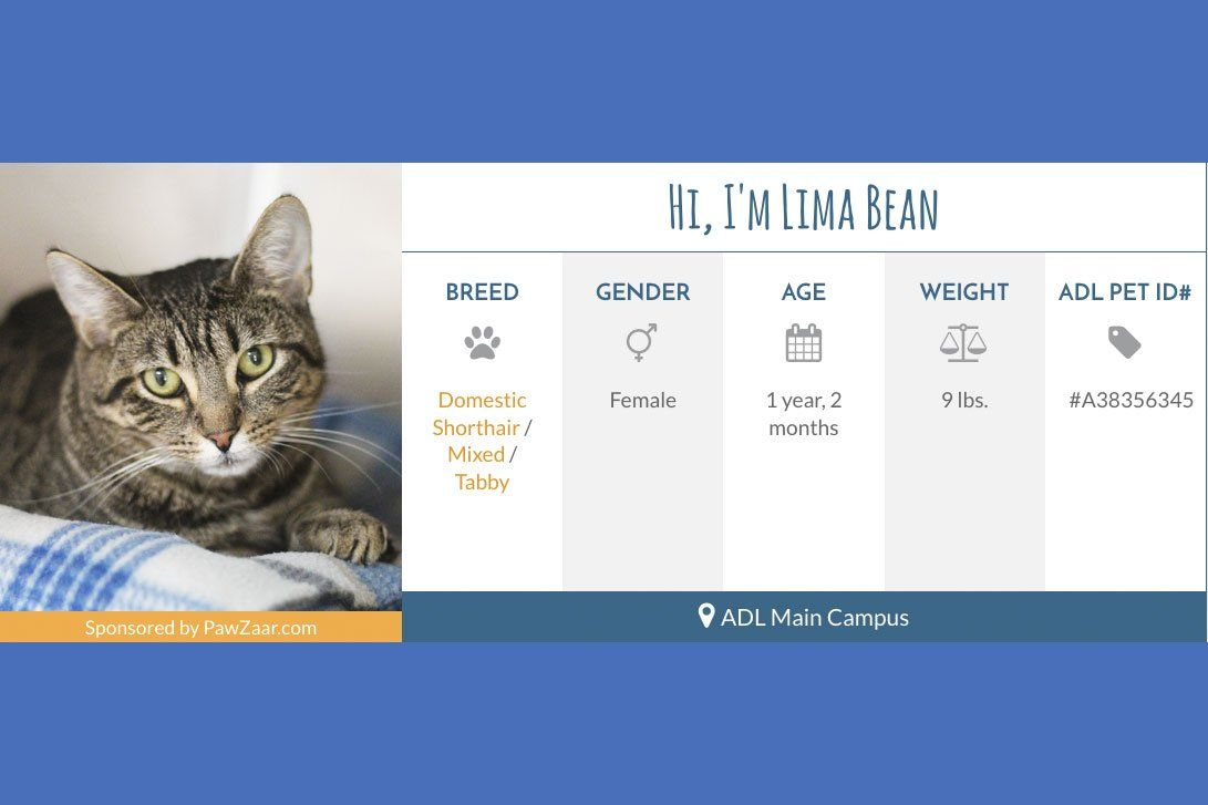 Meet Lima Bean Pet Id Pretty Cats Heartworm Prevention