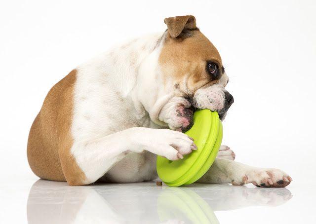 Tough Dog Toys Safe For Home Alone Tough Dog Toys Dog Toys