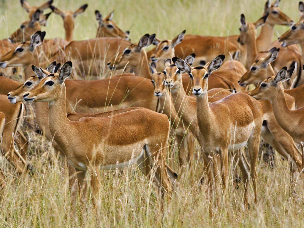 Burundi National Animal