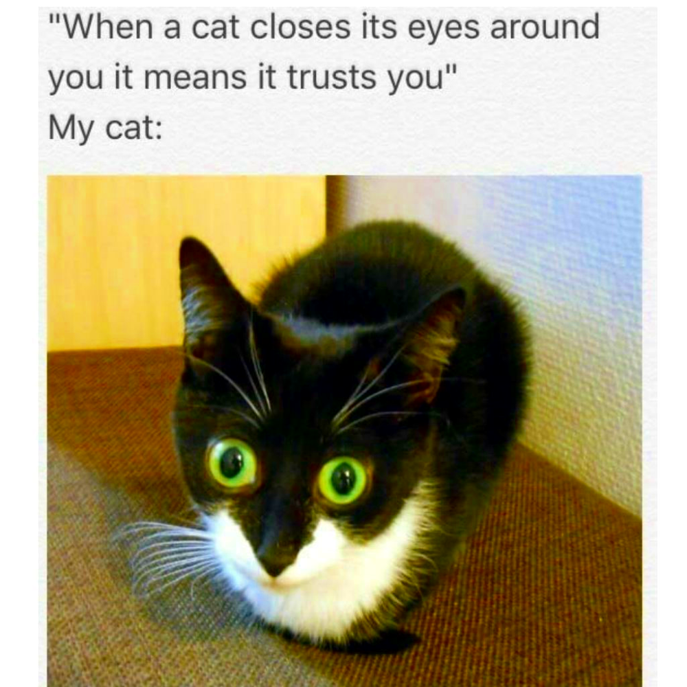 How To Tell When A Cat Trust You In 2020 Cat Quotes Funny Cute Cat Memes Funniest Cat Memes