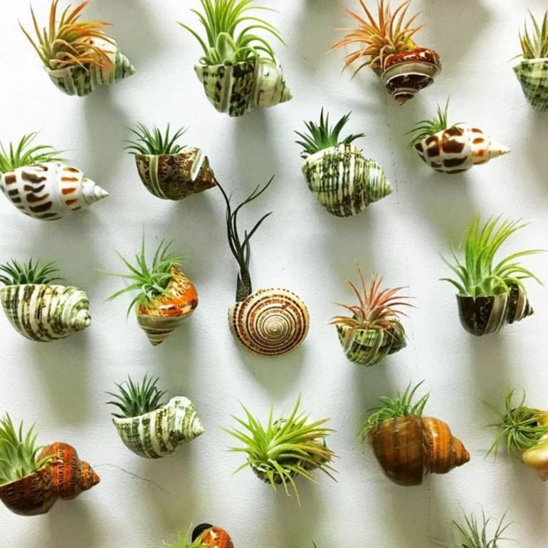 10 DIY Air Plant Holders For Your Home - HomelySma