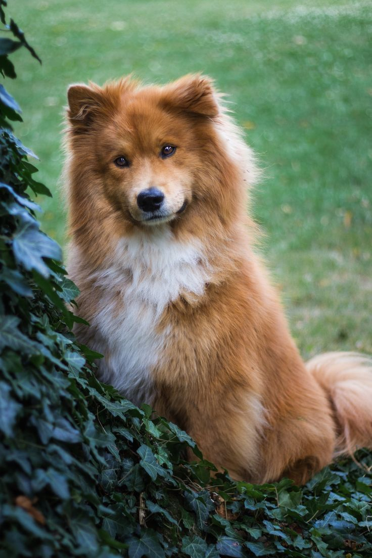 Kaufmannspuppy dog loves you pinterest dog animal and pup