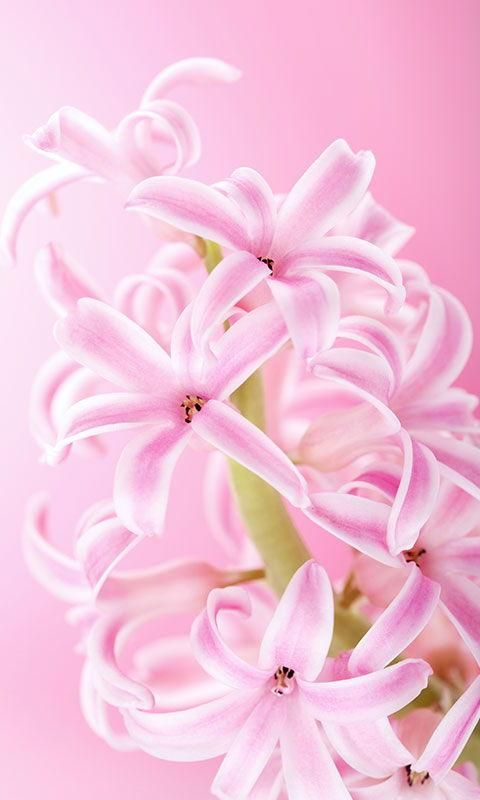 Pink live wallpaper bing images pink wallpaper pinterest pink live wallpaper bing images altavistaventures Gallery