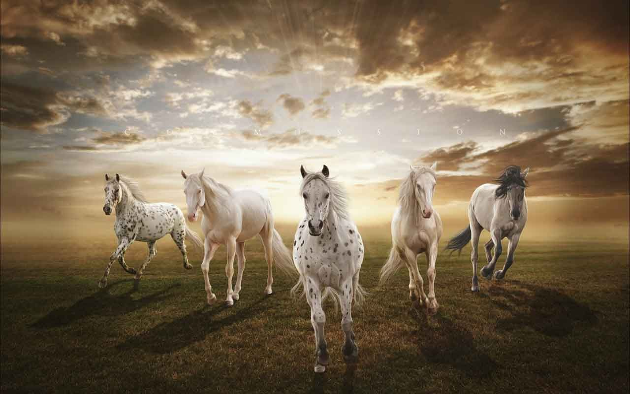 Amazing Wallpaper Horse Nature - a964cd01a6ac523bd7dd571097583f0e  Collection_46378.jpg
