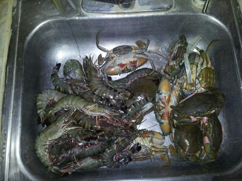 giant shrimp drinks prawn recipes