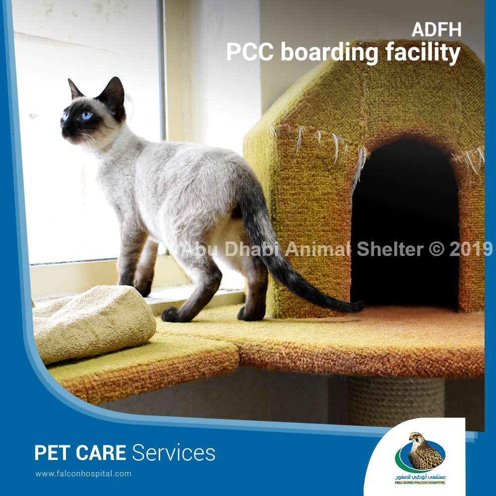 Pet Care Center Boarding Facility Pet Care Animal Shelter Pets