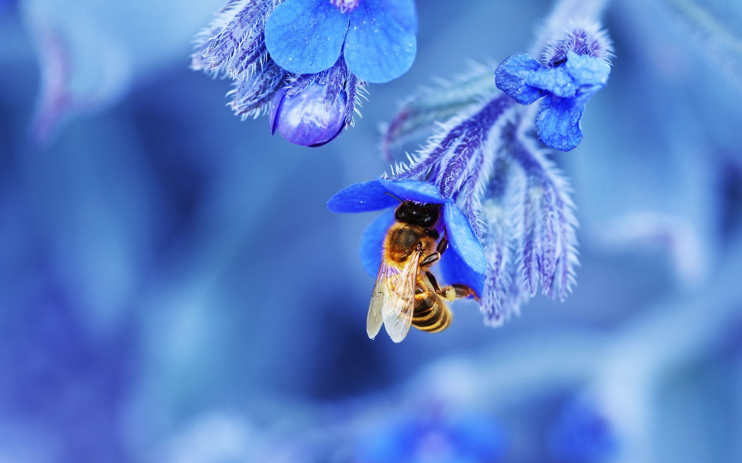 MACRO wallpaper Bee Wallpaper HD