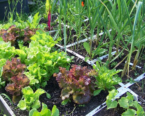How To Build A Square Foot Garden (video)