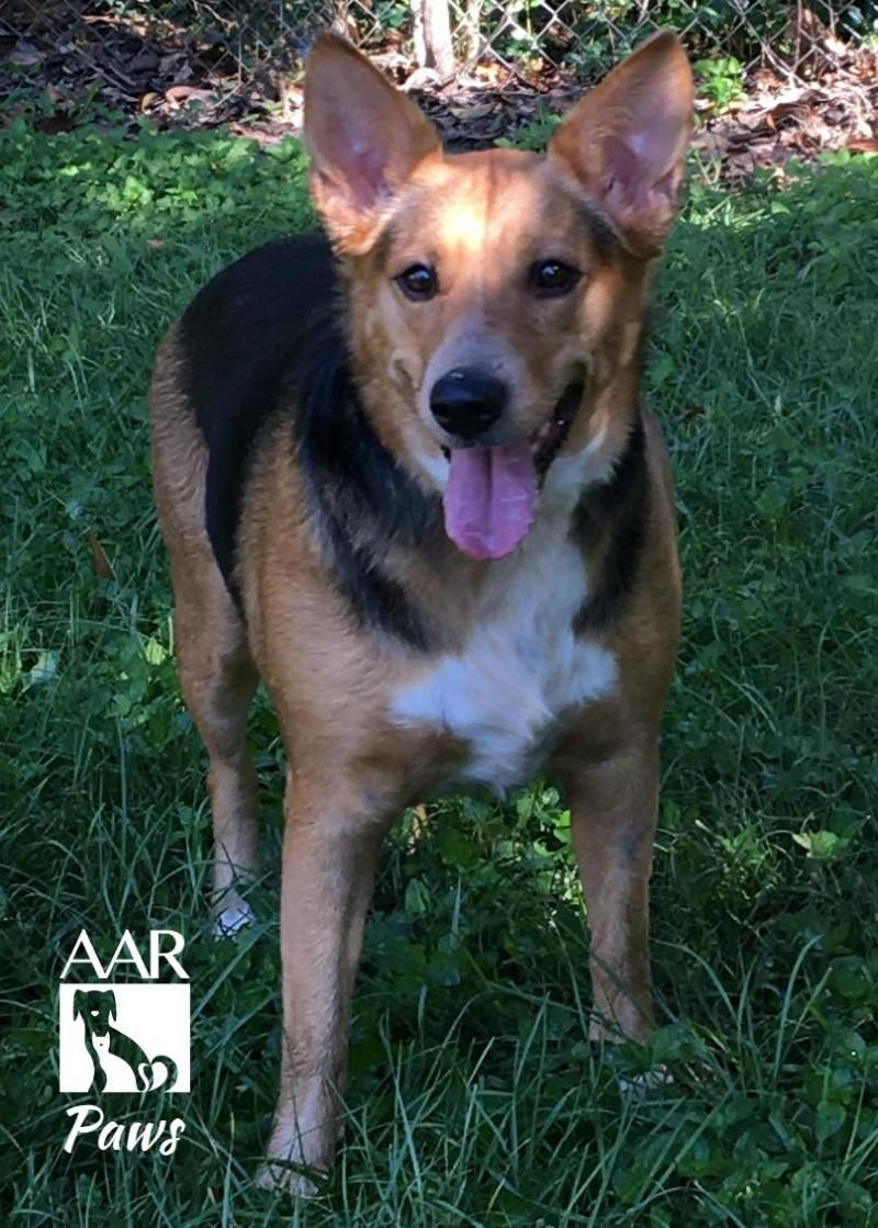 Adopt Paws on Petfinder Dog adoption, Calm dogs, Cattle