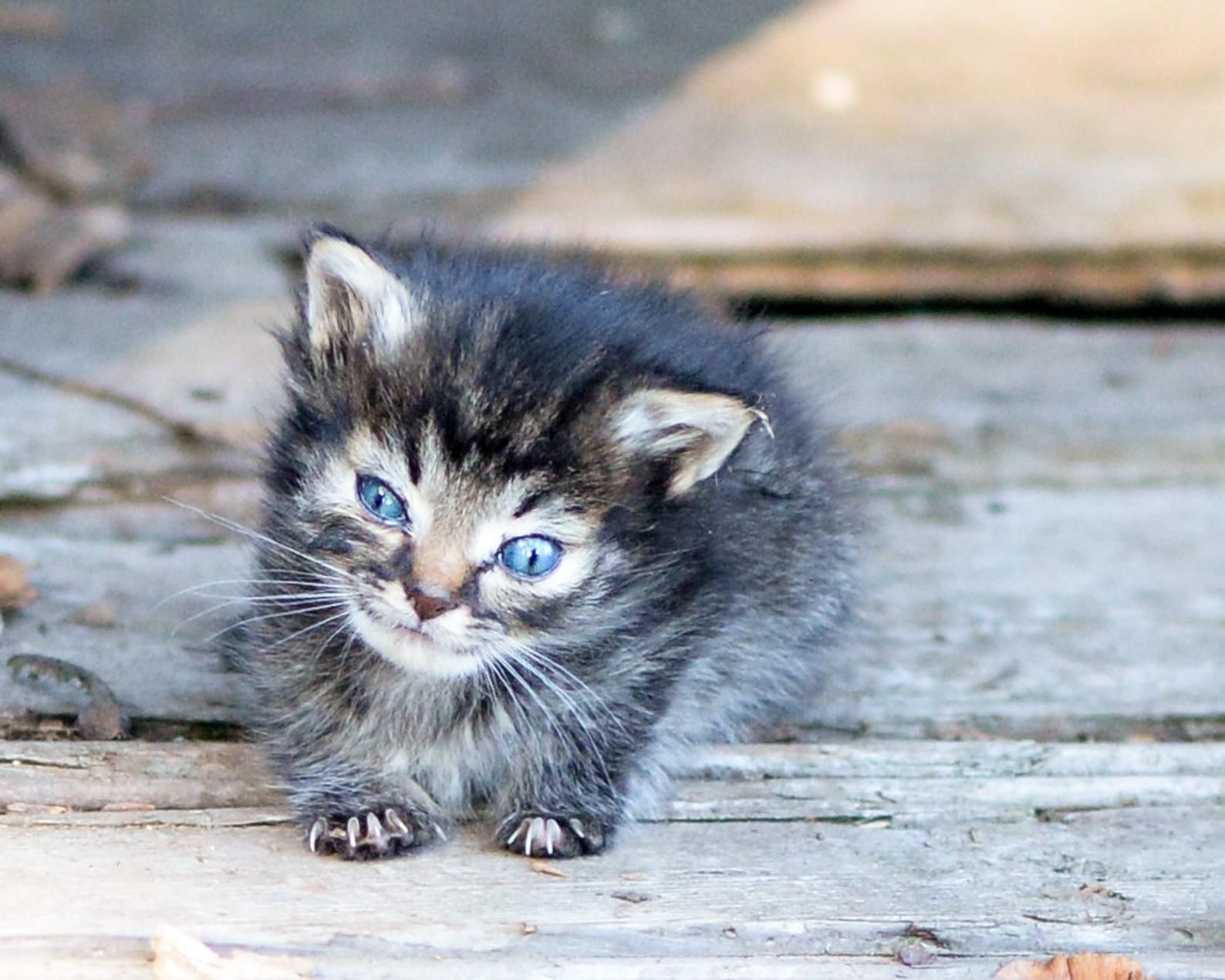 Photograph Of Nano The Tiniest Kitten For Download Etsy In 2020 Tiny Kitten Kitten Breeds Feral Cats