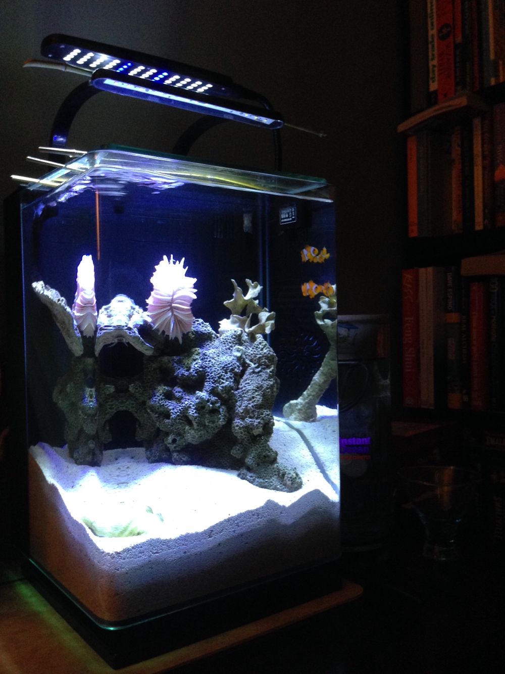 Freshwater aquarium fish ecosystem - 5 Gallons Nano Aquascapes Seascape Ecosystem Aquariums Fish Saltwater