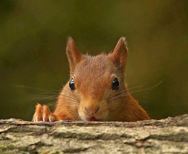 squirrel  eichhörnchen lustige tiere tiere
