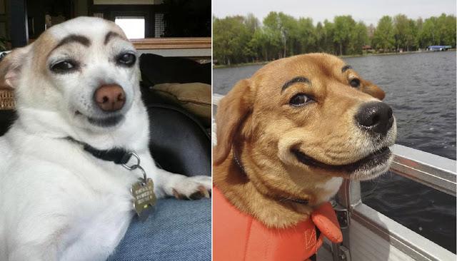 Perritos Con Cejas Dogs Labrador Animals