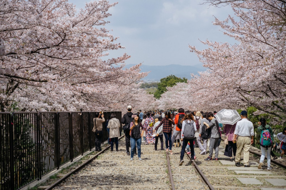 The 10 Best Places To See Cherry Blossoms In Kyoto In 2021 Most Beautiful Places Places To See Experience Nature