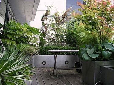 Piante verdi da balcone | giardinaggio | Pinterest