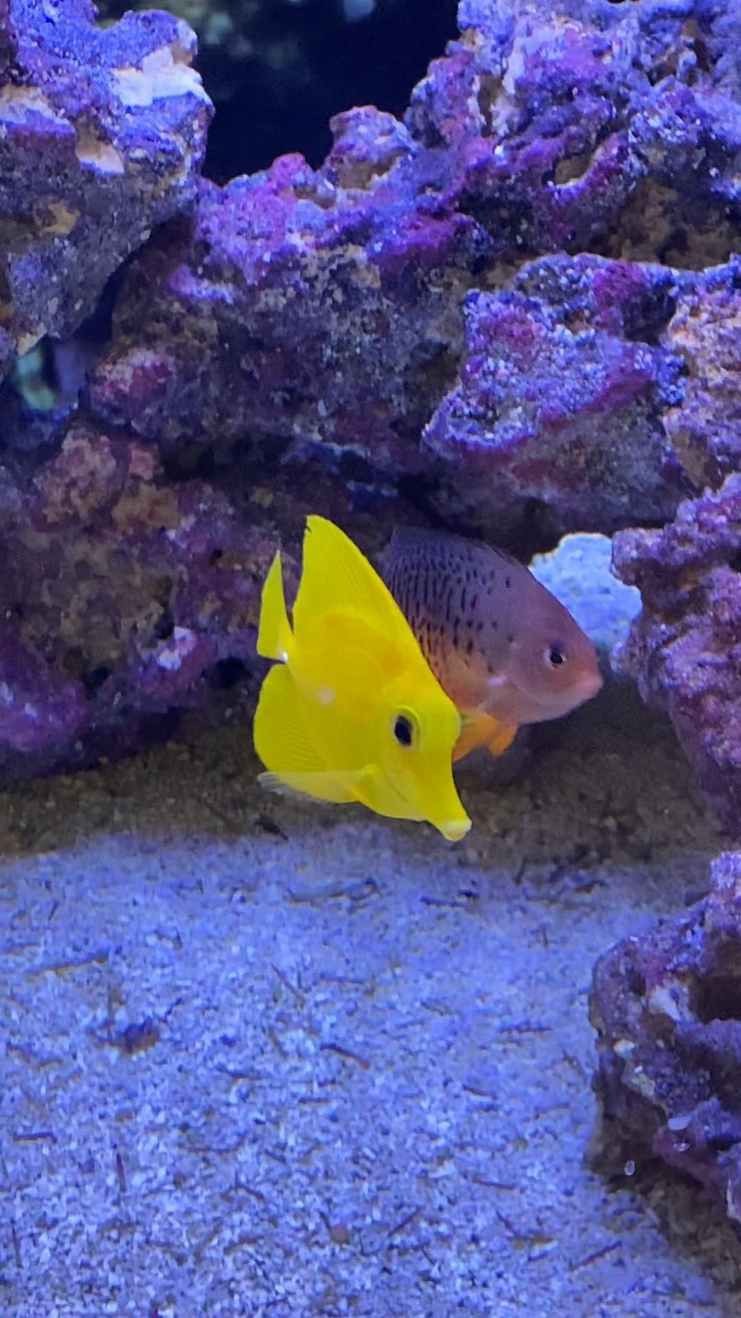 Stunning Marine Fish Video Fish Tank Fish Tank Design Saltwater Aquarium