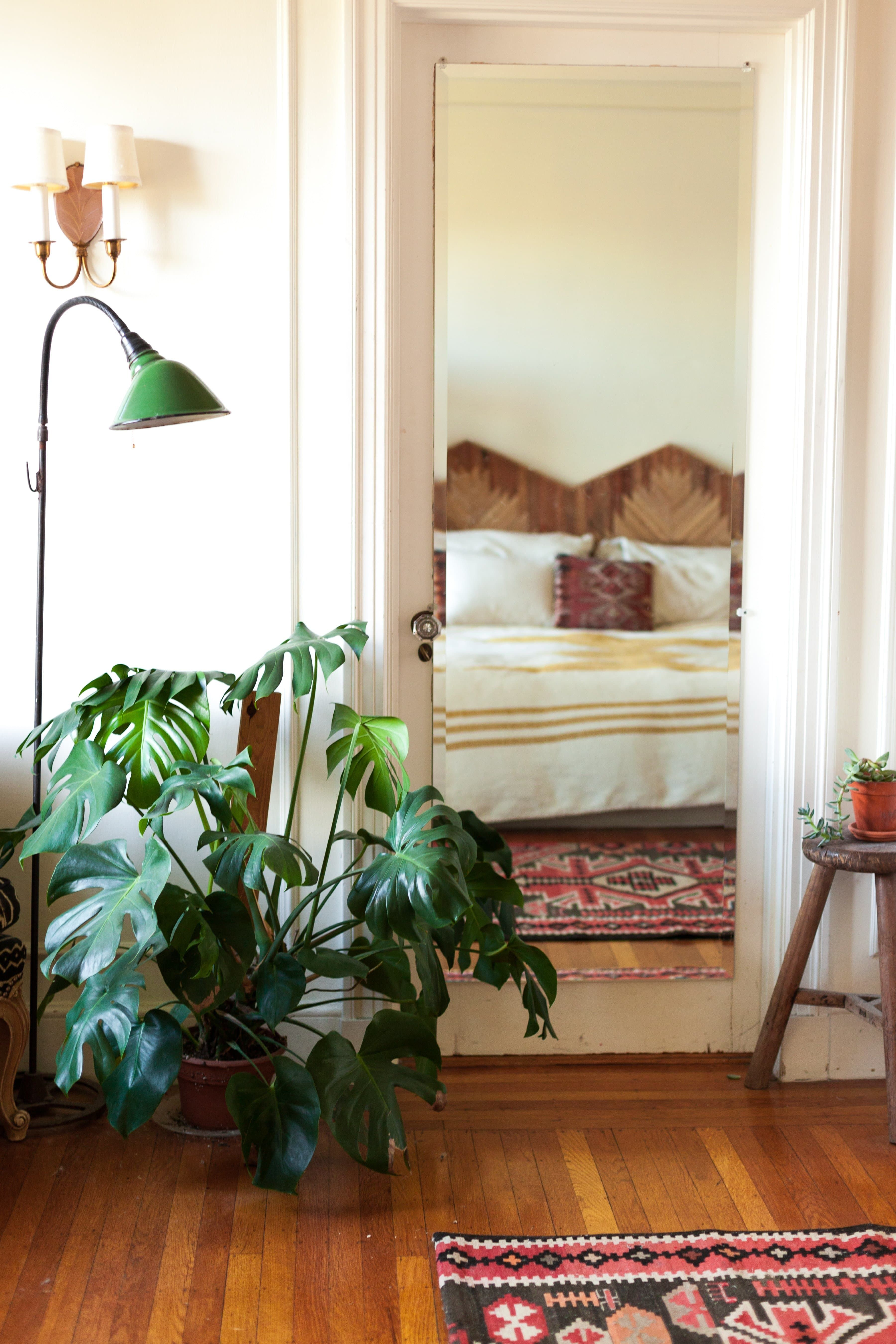 Photo of How to Care for the Forever Trendy and Tropical Monstera Deliciosa