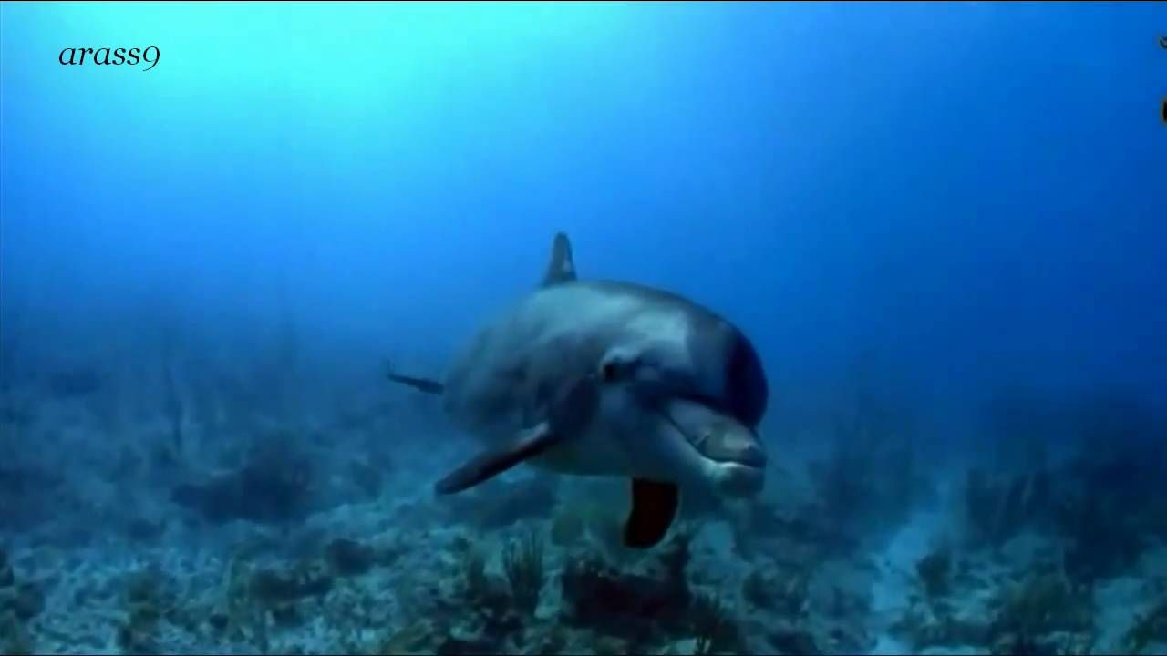||| Emotional Music Dolphin Touch - A Unique Friendship Human & Dolphin |||