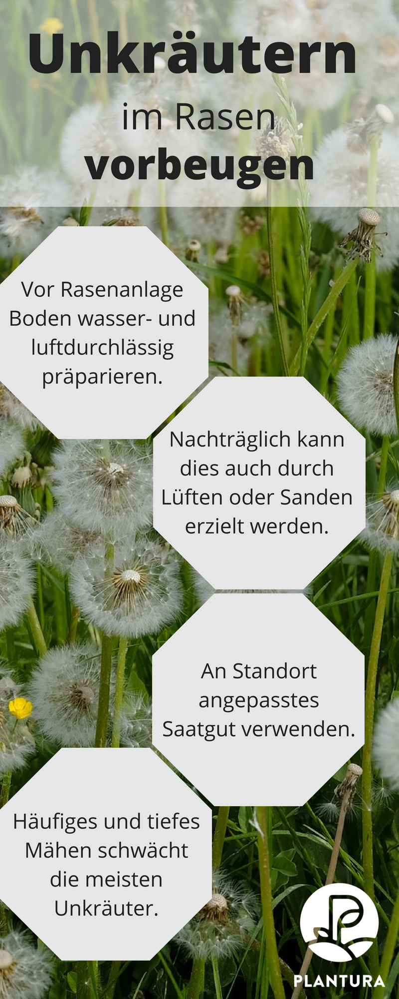 Verführerisch Alternative Zu Rasen Foto Von Unkräutern Im Vorbeugen: Was Ihr Bei Der