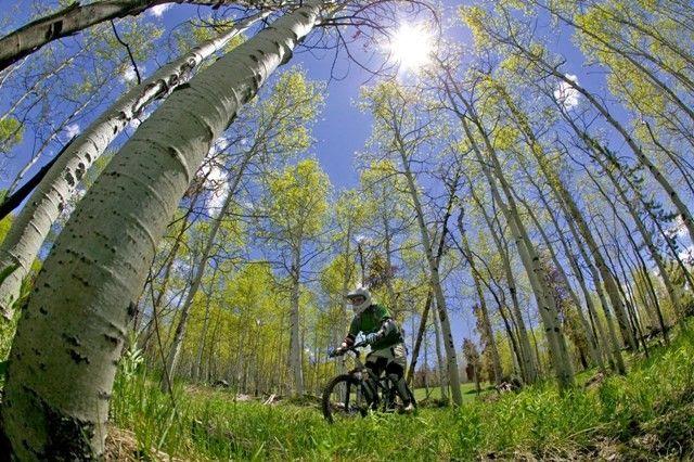 Always great mountain biking during the summer!