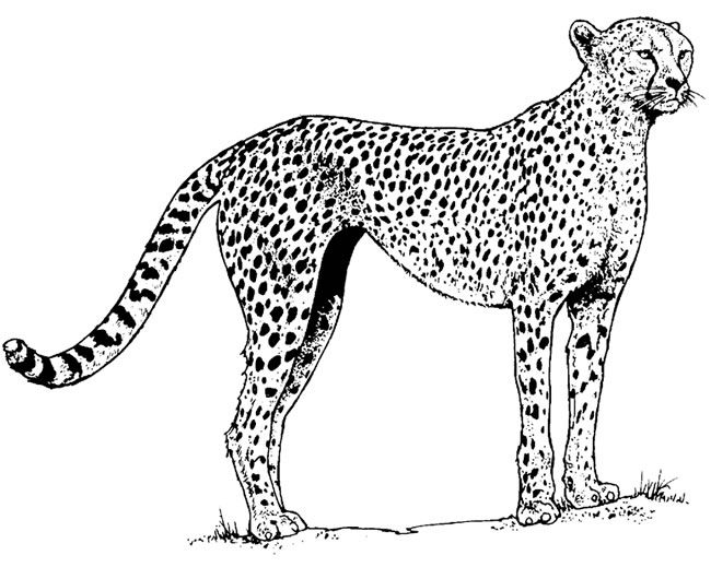 domestic animals coloring pages | Wild and Domestic Animals CD-ROM and Book Dover ...