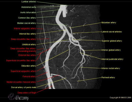 Angiography Angiogram Adapted From Angioct Showing All Pelvic