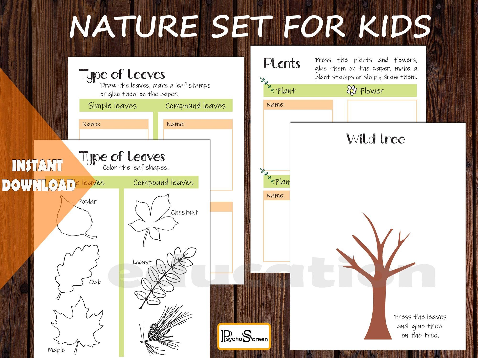 Nature Set Worksheets For Trees Leaves Flowers Plant