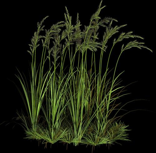 Gify animacja obrazki png zielono i wiosennie tree cut for Long grass plants