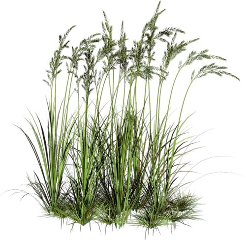 D co herbe psd arbres pinterest vegetal photoshop for Vegetacion ornamental