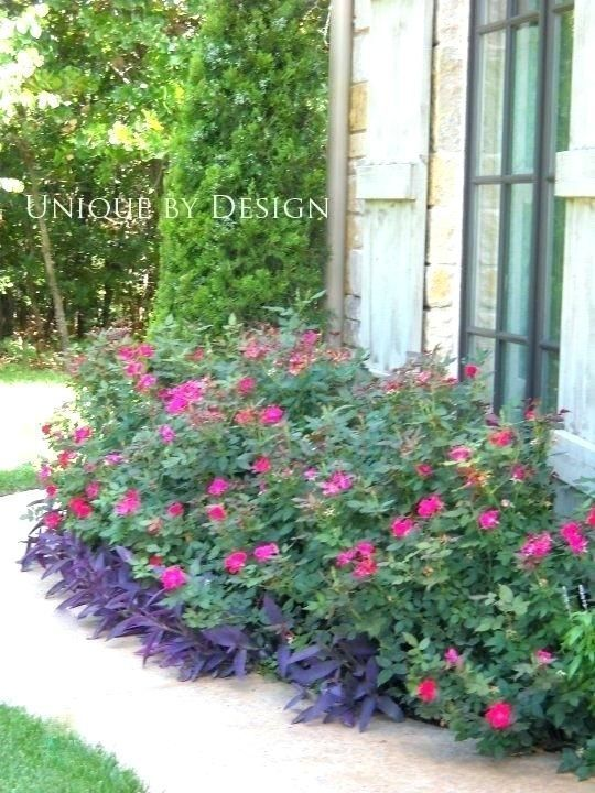 Easy Garden Ideas Along Fence Line Knockout Roses In Landscaping Best Knockout R #knockoutrosen Easy Garden Ideas Along Fence Line Knockout Roses In Landscaping Best Knockout R #knockoutrosen Easy Garden Ideas Along Fence Line Knockout Roses In Landscaping Best Knockout R #knockoutrosen Easy Garden Ideas Along Fence Line Knockout Roses In Landscaping Best Knockout R #knockoutrosen