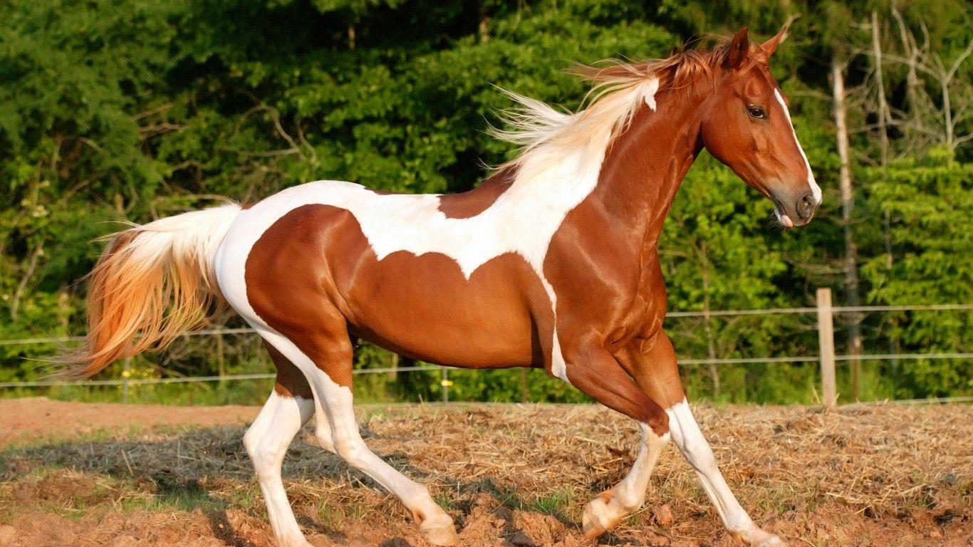 Beautiful Horse With Beautiful Hair Horse Hair At Saci