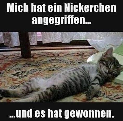Lustige Sprüche zum Schmunzeln und Teilen auf IstDasLustig.de #funnykittens