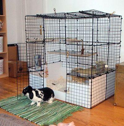 Pin On Rabbit Room Ideas
