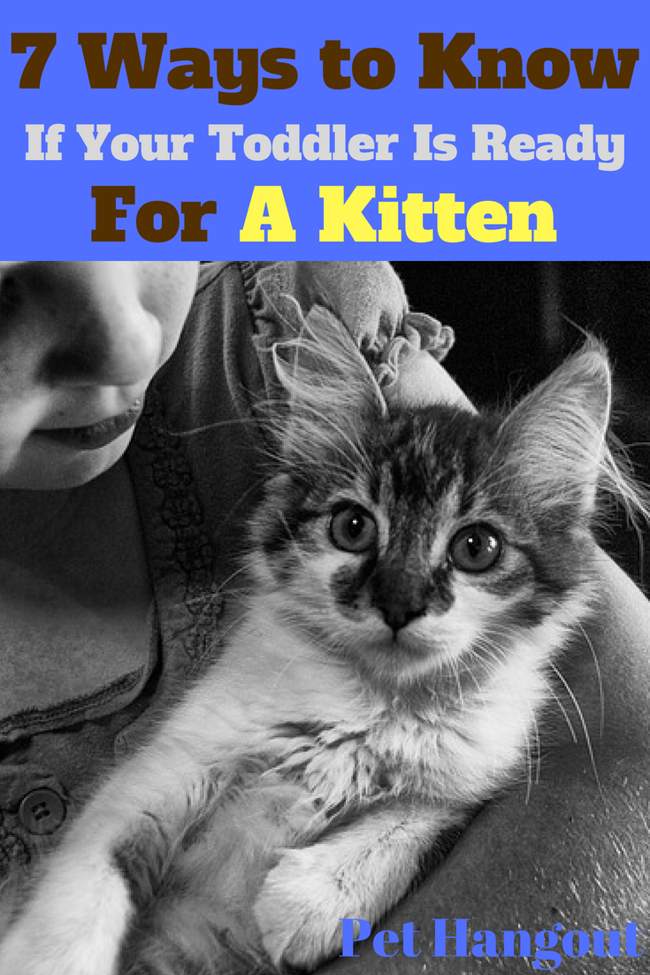 7 Ways To Know If Your Toddler Is Ready For A Kitten Kitten Adoption Cat Having Kittens Why Do Cats Purr