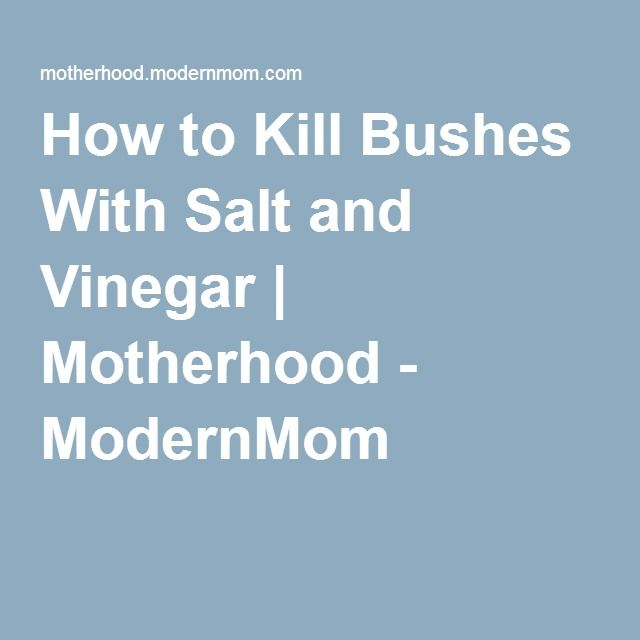 How To Kill Bushes With Salt And Vinegar Motherhood Modernmom Landscaping Garden Landscaping Trees To Plant Outdoor Gardens