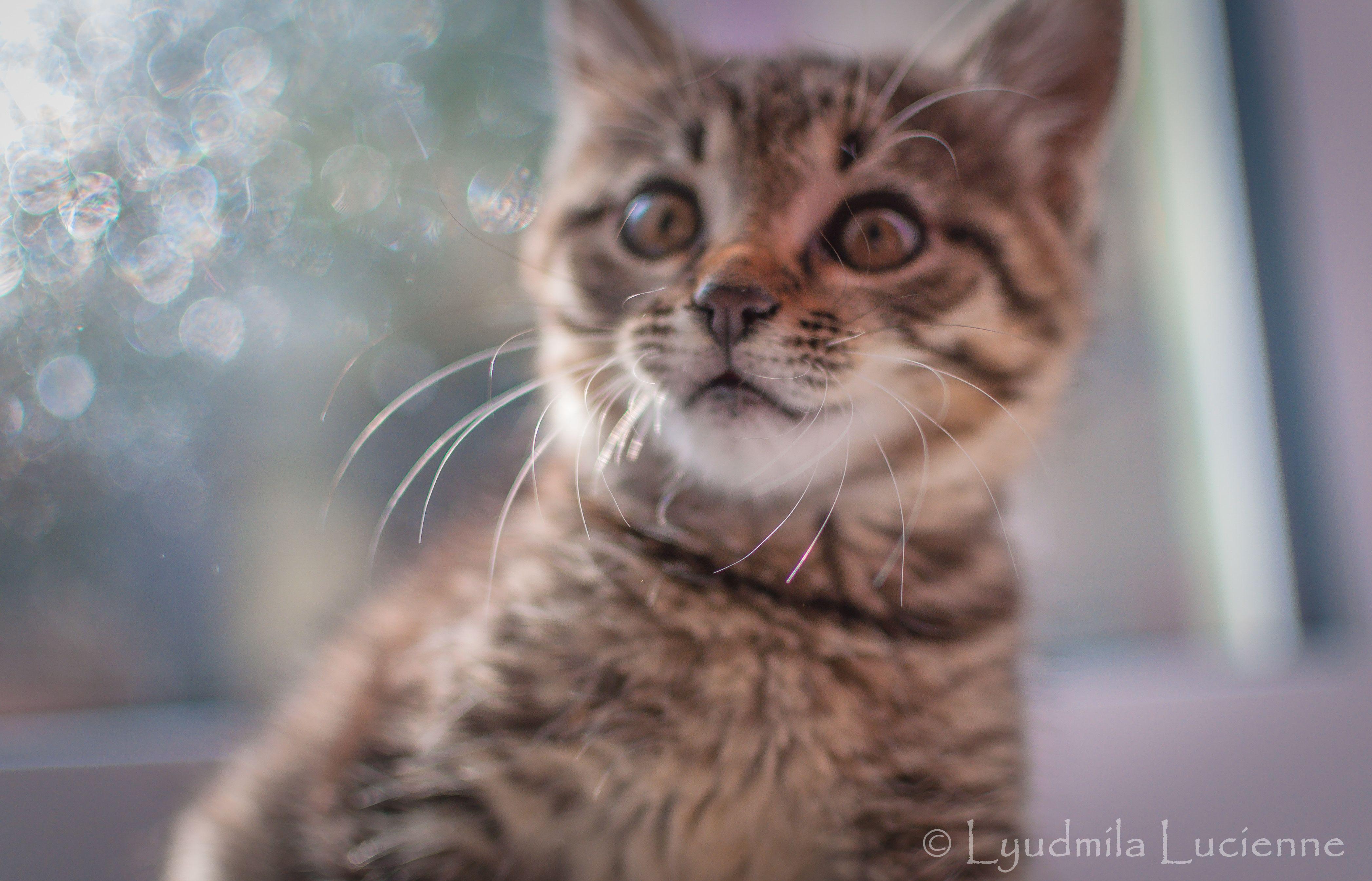 Ryska 's son. Син Риськи. originalcontent pet cat