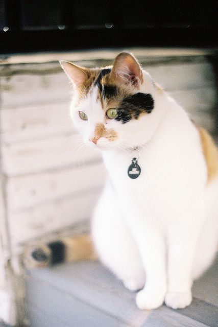 Pin Von Anna Maria Ruiz Marti Auf Cats Iii Gats Iii Gatos Iii