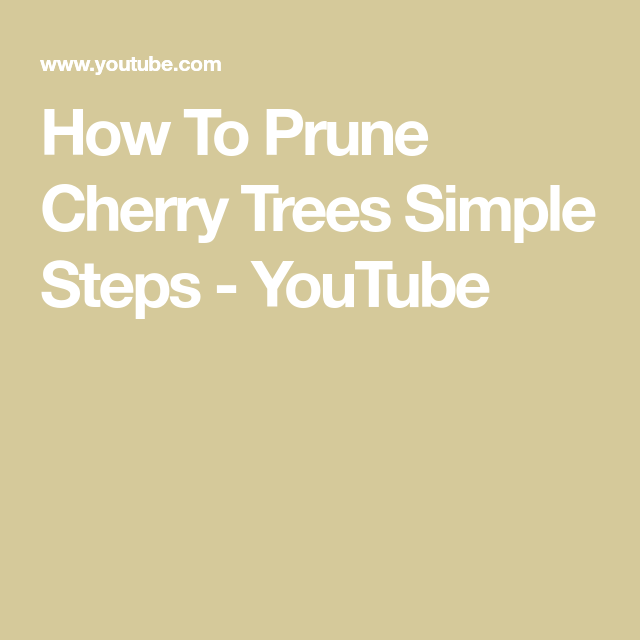 How To Prune Cherry Trees Simple Steps Youtube Cherry Tree Tree Pruning Dwarf Cherry Tree