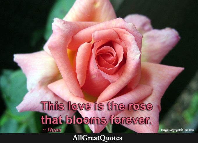 Pin By Nk On Roses Says الزهور والالوان وشخصيتك Rose Quotes