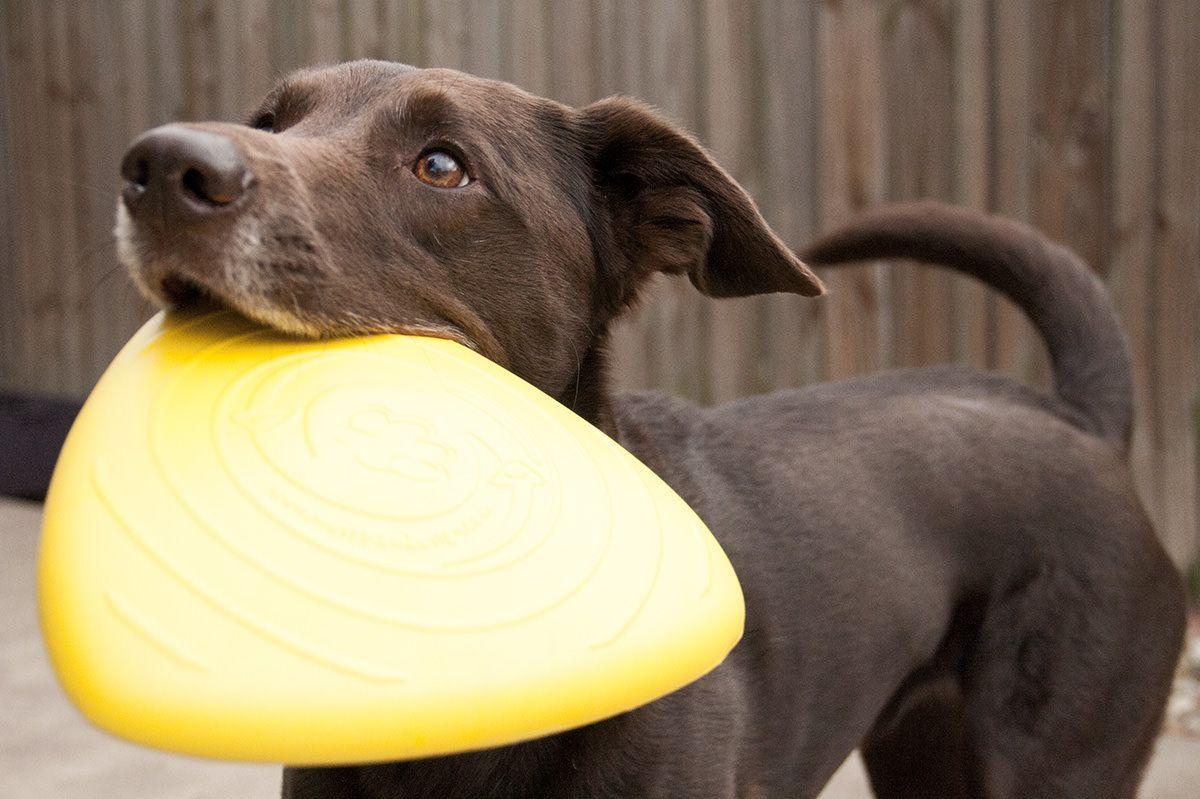 West Paw Fling Thing Flying Disc Outdoor Dog Toys Dog Toys Dog