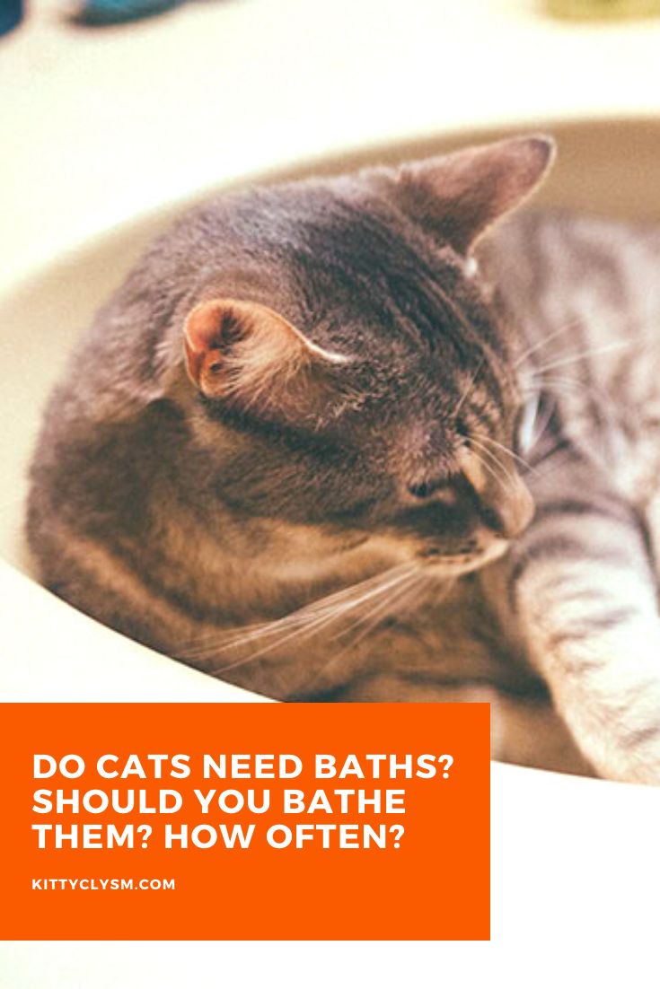 Do Cats Need Baths Should You Bathe Them How Often In 2020 Cats Cat Facts Cat Fleas