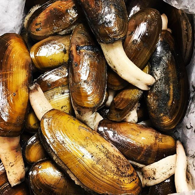 Incredible Razor Clams Joining The Tasting Menu Tomorrow Night Straight From A Very Limited Dig At Quinault Reservatio Tasting Menu Clams Fish And Seafood